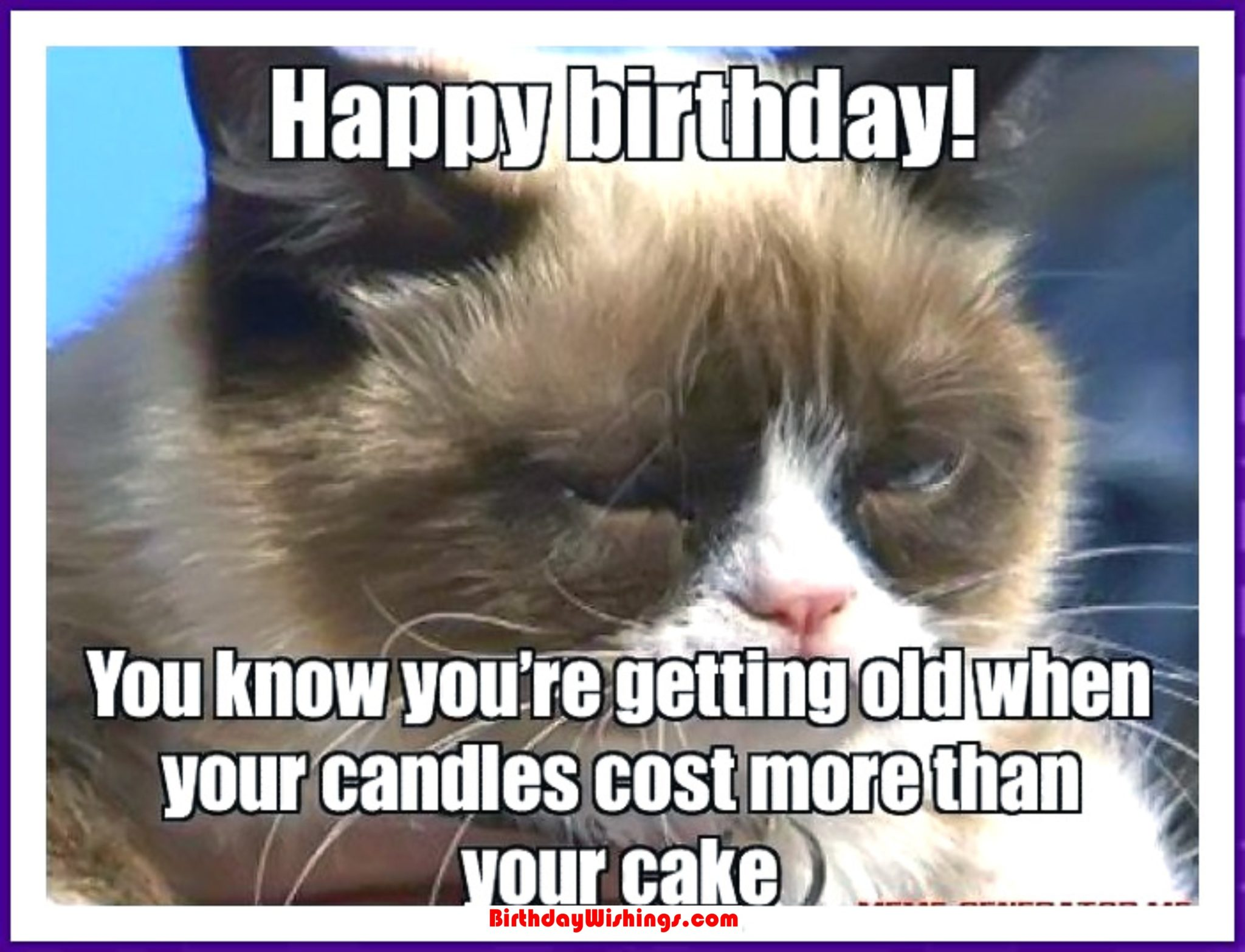 Funny Happy Birthday Memes With Cats, Dogs & Funny Animals